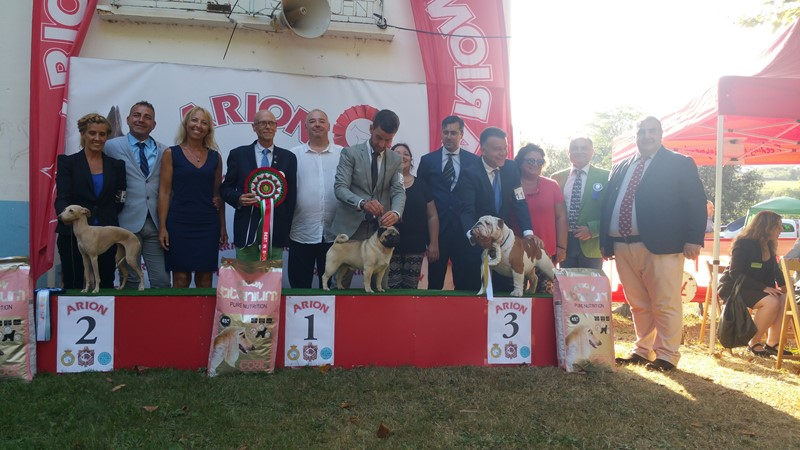 BES in SHOW 52 EXPOSICION NACIONAL DE BILBAO
